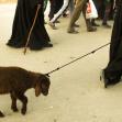 سوگواره سوم-عکس 24-جهانگیر سرزارع-پیاده روی اربعین از نجف تا کربلا