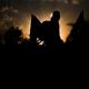 سوگواره سوم-عکس 12-حمید اسماعیل زاده-پیاده روی اربعین از نجف تا کربلا