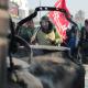سوگواره سوم-عکس 12-محمدرضا زندشهری قمی-پیاده روی اربعین از نجف تا کربلا