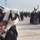 سوگواره سوم-عکس 32-محمد  آهنگر-پیاده روی اربعین از نجف تا کربلا
