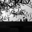 فراخوان ششمین سوگواره عاشورایی عکس هیأت-یاسر محمد خانی-بخش اصلی -جلسه هیأت