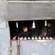سوگواره پنجم-عکس 97-رسول مختاری-پیاده روی اربعین از نجف تا کربلا