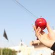 سوگواره سوم-عکس 72-سیده هاله حیدری-پیاده روی اربعین از نجف تا کربلا