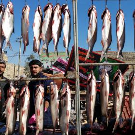سوگواره پنجم-عکس 101-امیر قیومی-پیاده روی اربعین از نجف تا کربلا