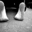 سوگواره پنجم-عکس 41-محمد حسین صادقی-پیاده روی اربعین از نجف تا کربلا