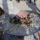 سوگواره چهارم-عکس 41-علی  حسن زاده-پیاده روی اربعین از نجف تا کربلا