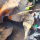 سوگواره سوم-عکس 4-پیمان نظرآبادی-پیاده روی اربعین از نجف تا کربلا
