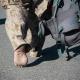 سوگواره دوم-عکس 1-محمد امین خلیفه شوشتری-پیاده روی اربعین از نجف تا کربلا