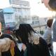 سوگواره دوم-عکس 110-سید لطفعلی رادخانه-جلسه هیأت فضای داخلی