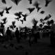 سوگواره دوم-عکس 23-غلام حسین شکرانی مقدم-پیاده روی اربعین از نجف تا کربلا