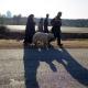سوگواره چهارم-عکس 5-لیلی تفرشی-پیاده روی اربعین از نجف تا کربلا