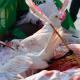 سوگواره چهارم-عکس 4-متین علیپور-آیین های عزاداری