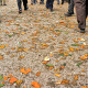سوگواره سوم-عکس 6- یاسر امیری-پیاده روی اربعین از نجف تا کربلا