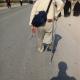 سوگواره سوم-عکس 15-سعید حمامیان زواره-پیاده روی اربعین از نجف تا کربلا