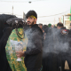 سوگواره پنجم-عکس 1-فاطمه عاقل زاده-پیاده روی اربعین از نجف تا کربلا