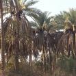 سوگواره دوم-عکس 5-حمیده کاظمی-پیاده روی اربعین از نجف تا کربلا