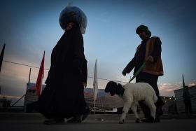 سوگواره چهارم-عکس 15-سید ولی  شجاعی لنگری-پیاده روی اربعین از نجف تا کربلا