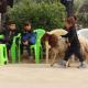 سوگواره پنجم-عکس 13-مسعود عطار-پیاده روی اربعین از نجف تا کربلا