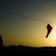 سوگواره پنجم-عکس 119-سید محمد جواد صدری-پیاده روی اربعین از نجف تا کربلا
