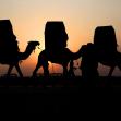 سوگواره پنجم-عکس 7-پوریا پاکیزه-پیاده روی اربعین از نجف تا کربلا