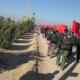 سوگواره دوم-عکس 120-محمد کشاورز-پیاده روی اربعین از نجف تا کربلا