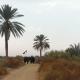 سوگواره سوم-عکس 1-محمد باقری-پیاده روی اربعین از نجف تا کربلا