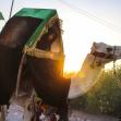 سوگواره چهارم-عکس 4-پوریا اسراری-پیاده روی اربعین از نجف تا کربلا