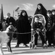 سوگواره سوم-عکس 116-علی ناصری-پیاده روی اربعین از نجف تا کربلا