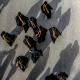سوگواره پنجم-عکس 40-مجید حجتی-پیاده روی اربعین از نجف تا کربلا