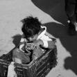 سوگواره چهارم-عکس 4-وحید یعقوبلو-پیاده روی اربعین از نجف تا کربلا