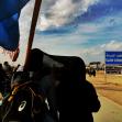 سوگواره چهارم-عکس 24-علیرضا رحمانی پور-پیاده روی اربعین از نجف تا کربلا