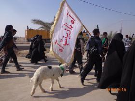 سوگواره سوم-عکس 13-علی مقنی-پیاده روی اربعین از نجف تا کربلا