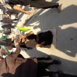 سوگواره پنجم-عکس 37-فرهاد کسائی-پیاده روی اربعین از نجف تا کربلا