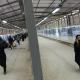 سوگواره سوم-عکس 65-روح اله پورسامانی-پیاده روی اربعین از نجف تا کربلا