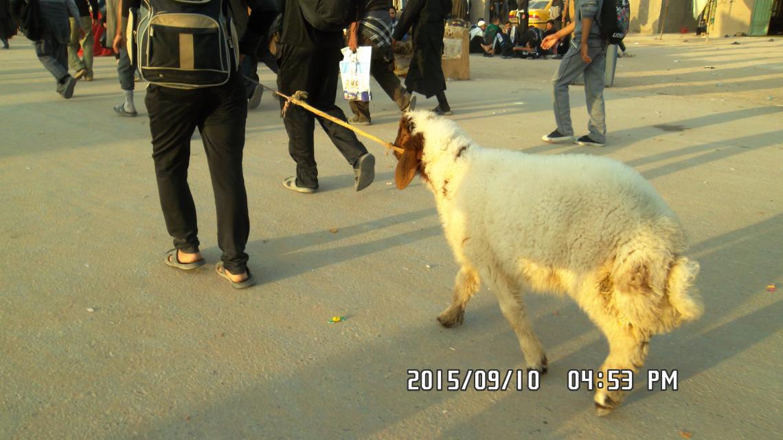 سوگواره چهارم-عکس 40- احمد عسگری زاده-پیاده روی اربعین از نجف تا کربلا