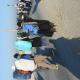 سوگواره دوم-عکس 5-مجتبی کریمی-پیاده روی اربعین از نجف تا کربلا