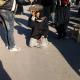 سوگواره دوم-عکس 1-سید محسن میر قیصری-پیاده روی اربعین از نجف تا کربلا